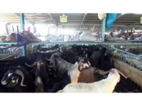 Canlı hayvan pazarında yaşam