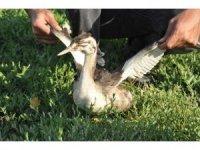 Bahri kuşu tedavisinin ardından doğaya bırakıldı