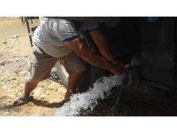 Susuz kalan kaplumbağalara belediyeden su takviyesi