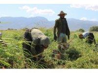 Ziraat Odasından tarım işçilerinin yaşam şartlarını iyileştirme çağrısı