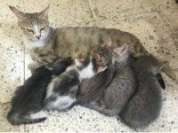 Anne kedinin şefkati görülmeye değer