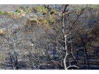 """Urla'daki yangının ardından Başkan Oğuz: """"Yeniden ağaçlandıracağız"""""""