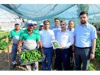 Çiftçilere 100 bine yakın sebze fidesi dağıtılacak