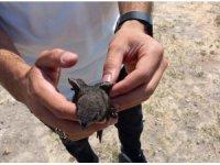 Tedavisi tamamlanan Ebabil kuşu doğaya bırakıldı