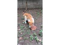 Kayıp kedilerini komşu evinde buldular