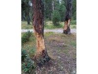 Piknikçiler ağaçlara zarar verdi