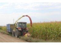Iğdır'da silajlık mısır hasadı devam ediyor