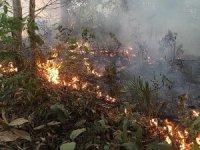 Dünyanın akciğeri Amazon ormanları alev alev yanıyor!