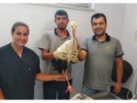 Yaralı halde bulunan leylek tedavisinin ardından doğaya salındı