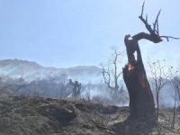 Beydağ'da korkutan orman yangını