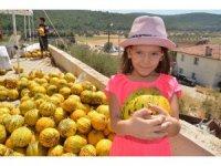 """Urla """"sarı kokulu"""" festival ile coştu"""