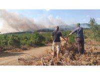 Edirne'de orman yangını