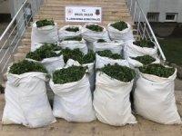Bingöl'de 1 ton 280 kilo esrar ile 500 binden fazla Hint keneviri ele geçirildi