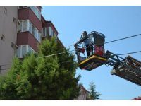 Köpekten korkan kedi 15 saat ağaçta mahsur kaldı