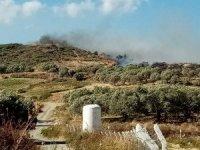 Hatay'da bitki örtüsü ve zeytinlik yangını çıktı