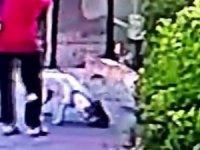 Küçükçekmece'de pitbull dehşeti Yavru kediyi saniyeler içinde parçaladı...