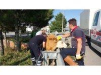 Bariyerlere sıkışan ineği itfaiye kurtardı