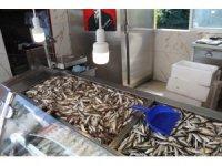 Rize'de balık olmayınca tezgahlar boş kaldı
