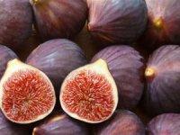 Bursa'nın siyah inciri dünya pazarında!