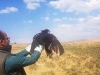 Tedavileri tamamlanan kuşlar özgürlüğe kanat çırptı