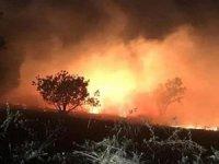Muğla'da yıldırım düşmesi sonucu orman yangını!