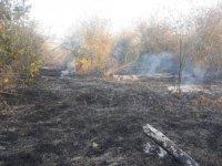Bilecik'te çıkan yangında kavak ve meyve ağaçları kül oldu