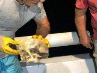 Denizin 2 mil açığında insan kafatası bulundu