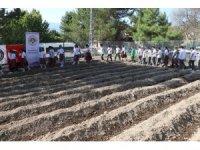 Safran öğrencilerin eliyle toprakla buluştu