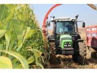Vali kontağı çevirdi, silajlık mısır hasadı başladı