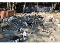 Müziği duyan yüzlerce kedi yemeğe koşuyor