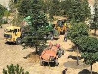 Hekimhan Belediyesi yol çalışma alanındaki ağaçları taşıyor