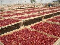 """KMTSO Başkanı Zabun: """"Maraş biberi küresel marka konumundadır"""""""