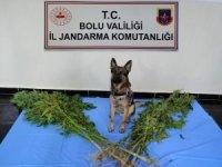 Bolu'da, kaçak silah ve uyuşturucu operasyonu: 3 gözaltı