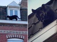 Çatılarda gezip herkesi korkutmuştu... Fransa'nın konuştuğu panteri çaldılar!