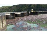 Her sel sonrası Borçka'daki Muratlı Barajı çöplüğe dönüyor