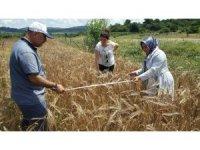 Kocaeli'de çiftçilere yüzde 50 hibeli tohumlar dağıtılacak