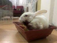 Minik Zübeyda, yaralı tavşanı için yardım bekliyor