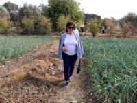 Hülya Koçyiğit'ten Barış Pınarı Harekatı'na destek