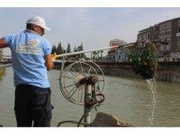 Asi Nehri'nde su sümbülleriye mücadele