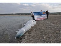 Porsuk Baraj Gölüne 3 bin yayın balığı yavrusu bırakıldı