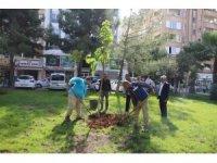 Haliliye'de fidanlar toprakla buluşuyor