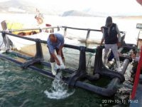 Kemer Baraj Gölü'ne 2 bin yayın balığı bırakıldı