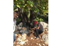 Kaş'ta AKSAN'dan' biyolojik çeşitliliğin korunması' araştırması