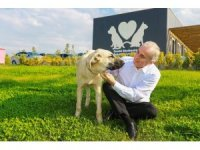 Sopayla acımasızca dövülen köpek artık 'Mutlu' olacak