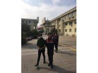 Fındık hırsızları yakalandı: 3 tutuklama
