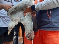 Ayakları ve gagası bağlanan martıyı belediye işçileri kurtardı