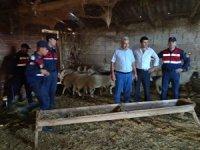 Çalınan koyunları jandarma buldu