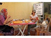 Cin biber müdavimi horozun 'Paşa' hayatı