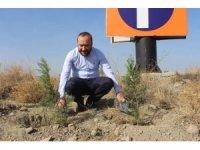 AK Parti İl Başkanlığı 3 bin adet fidanı toprakla buluşturdu