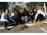 Devrek Ahmet Taner Kışlalı Ortaokulundan fidan dikimi